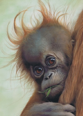 Click here to go to the Wildlife Paintings Gallery