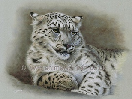snow-leopard-limited-edition-print